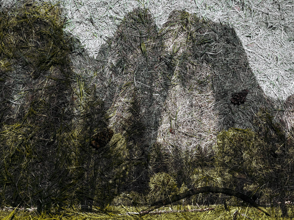 Tent-Camera-Image-On-Ground-View-of-Cathedral-Rocks-From-El-Capitan-Meadow_12_slides